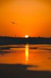 Gaviota en el amanecer Foto de archivo libre de regalías