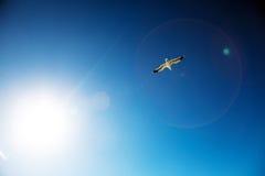 Gaviota en el cielo azul Imagen de archivo