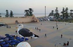Gaviota en el fondo del cuadrado de Moulay Hassan en Essaouira, Marruecos fotos de archivo libres de regalías
