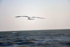 Gaviota en el mar foto de archivo libre de regalías