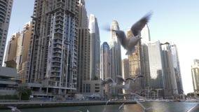 Gaviota en el muelle Las gaviotas vuelan sobre el muelle en el fondo de los rascacielos Districto del puerto deportivo de Dubai E almacen de video
