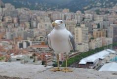 Gaviota en el parapeto de piedra Edificio moderno de Mónaco en el fondo fotos de archivo