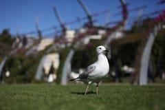 Gaviota en el parque Fotografía de archivo