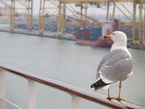 Gaviota en el puerto Foto de archivo libre de regalías