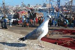 Gaviota en el puerto de Essaouira, Marruecos Foto de archivo libre de regalías