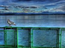 Gaviota en el transbordador Foto de archivo libre de regalías