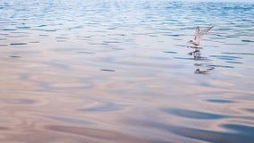 Gaviota en la acción de madera en la bahía de Kabui Raja Ampat Fotos de archivo
