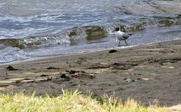 Gaviota en la orilla del lago Imágenes de archivo libres de regalías