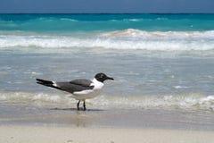 Gaviota en la playa Fotos de archivo