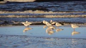 Gaviota en la playa Libertad de Hapiness y manera de vida fácil Imagenes de archivo