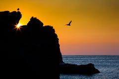 Gaviota en la puesta del sol Fotografía de archivo