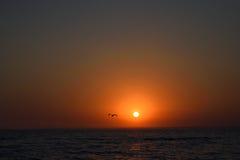 Gaviota en la puesta del sol en la playa fotografía de archivo