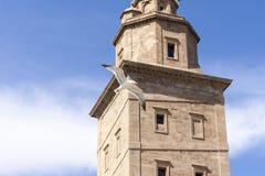 Gaviota en la torre de Hércules Fotografía de archivo libre de regalías