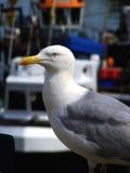 Gaviota en puerto Fotografía de archivo