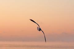 Gaviota en puesta del sol Fotos de archivo