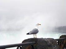 Gaviota en roca de la repisa de la verja con la niebla de Niagara Falls Foto de archivo