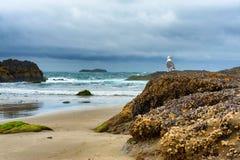 Gaviota en roca en la playa Fotos de archivo libres de regalías
