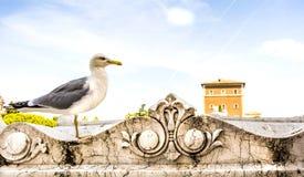 Gaviota en Roma foto de archivo