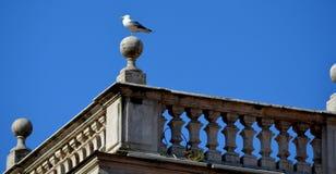 Gaviota en Roma Fotografía de archivo