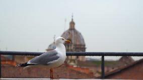 Gaviota en Roma contra la perspectiva de la bóveda del templo almacen de metraje de vídeo