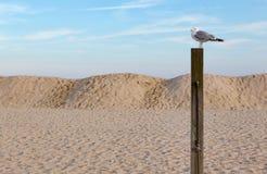 Gaviota en un poste en la playa imágenes de archivo libres de regalías