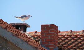 Gaviota en un tejado tejado Fotografía de archivo