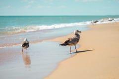 Gaviota en una orilla de mar arenosa Imágenes de archivo libres de regalías