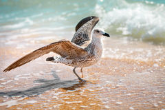 Gaviota en una orilla de mar arenosa Imagen de archivo