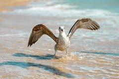 Gaviota en una orilla de mar arenosa Foto de archivo libre de regalías