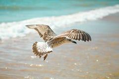 Gaviota en una orilla de mar arenosa Fotos de archivo
