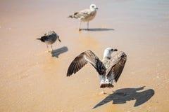 Gaviota en una orilla de mar arenosa Foto de archivo