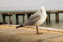 Gaviota en una playa foto de archivo libre de regalías