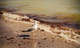 Gaviota en una playa contaminada sucia Fotografía de archivo