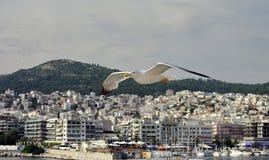 Gaviota en vuelo Fotografía de archivo