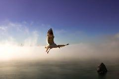 Gaviota en vuelo Foto de archivo