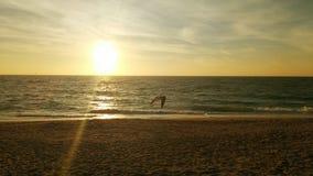 Gaviota en vuelo, puesta del sol de oro Foto de archivo