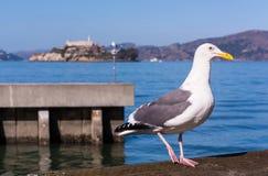 Gaviota encaramada en San Francisco Bay con la isla de Alcatraz en el fondo Foto de archivo