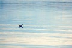 Gaviota encendido del lago Foto de archivo