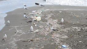 Gaviota entre los desperdicios en la playa en Nápoles almacen de metraje de vídeo