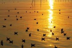 Gaviota más sunest de oro ligera Fotografía de archivo