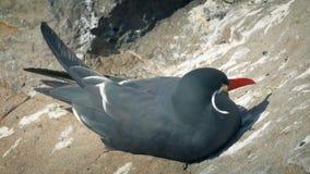 Gaviota que descansa sobre los acantilados por el mar metrajes
