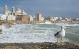 Gaviota que mira el horizonte en Cádiz foto de archivo libre de regalías