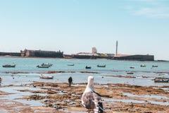 Gaviota que mira a un hombre en Cádiz en Andalucía, España foto de archivo