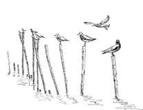 Gaviota que se coloca en el polo Fotografía de archivo libre de regalías