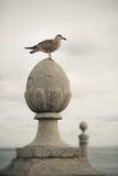 Gaviota que se sienta en el polo en Lisboa Foto de archivo libre de regalías