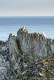 Gaviota que se sienta en el top de la roca Fotos de archivo