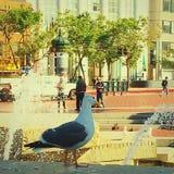 Gaviota que vigila plaza de la O.N.U fotografía de archivo