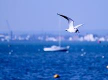 Gaviota que vuela sobre el mar imagenes de archivo