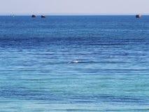 Gaviota que vuela sobre el mar y las boyas Imagen de archivo libre de regalías