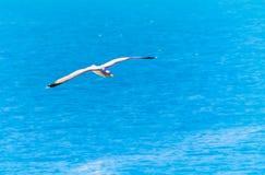 Gaviota que vuela sobre el mediterráneo Foto de archivo libre de regalías